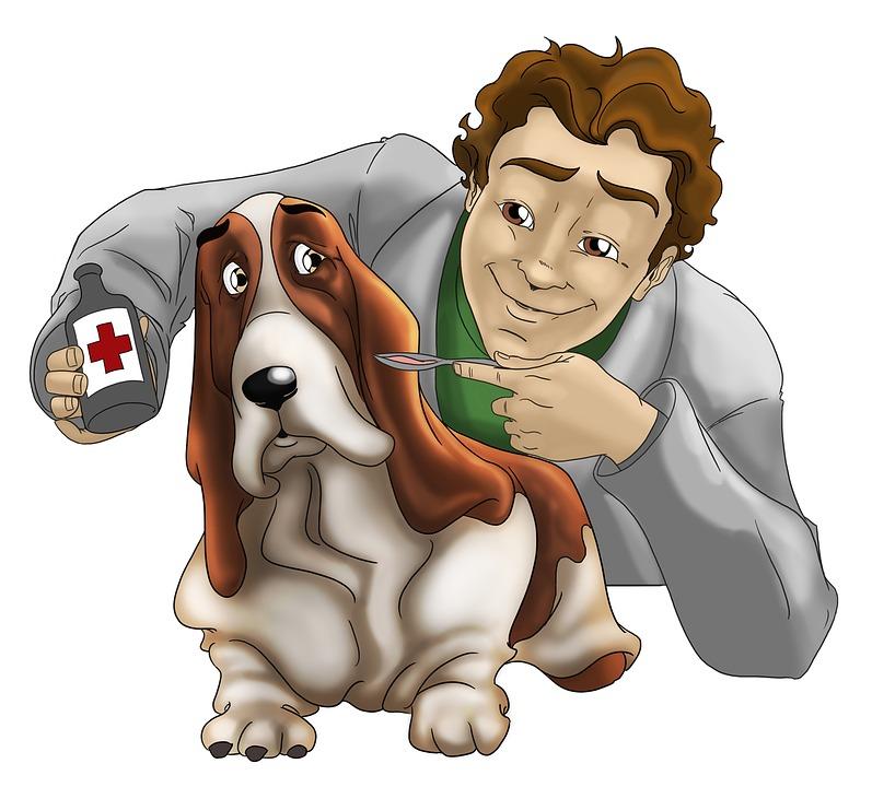 prévoyance des vétérinaires et assurance madelin